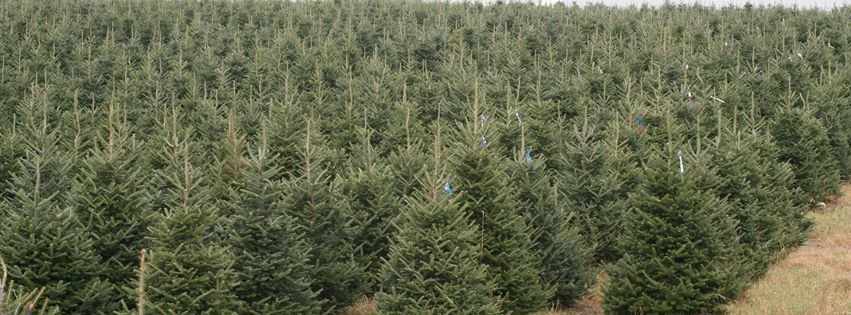 Christmas Trees: Then and Now