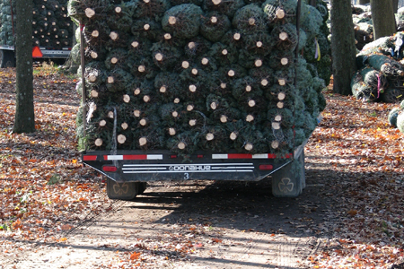 Michigan Christmas Tree Association - Bundled Trees