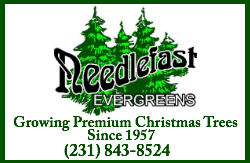 Needlefast Evergreens
